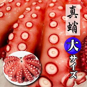 真蛸 たこ チルドでお届け (ボイルたこ) 1杯 約1kg 大サイズ【生食用・刺身・カルパッチョ・サラダ・おでん】色々な料理にお使いいただけます【冷蔵便】