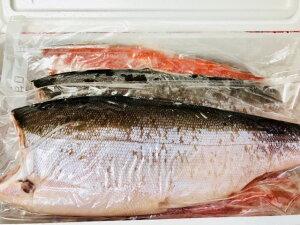 天然 紅鮭 ・甘塩鮭【業務用・8kg入り】お弁当・おにぎり・お茶漬け・ムニエルなどでお使いいただけます【冷凍便】