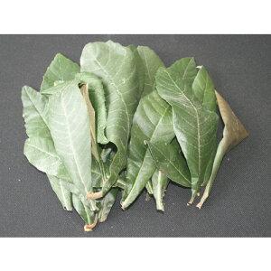 枇杷の葉(ペット用) 150g(乾燥しているびわ葉・生葉など) ※除草剤不使用