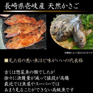 見た目の悪い魚ほど味がいいかさご