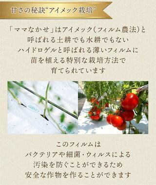 04アイメック農法でつくられた特殊なトマト