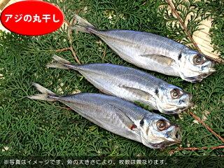 無添加【B】壱岐の手造り干物セット「大漁」アジの丸干し