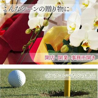 開店祝い・開業祝い・竣工祝いなどのお祝い、ゴルフコンペなどの景品に