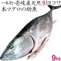 【H】【送料無料】壱岐産天然ヨコワ
