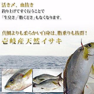 伝統漁法の一本釣り