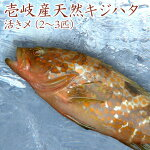 【K】【1本釣り】壱岐産天然キジハタ(約1kg)