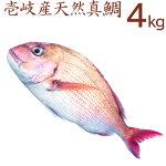 壱岐の一本釣り天然真鯛。下処理代無料