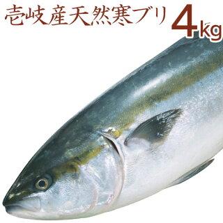 寒ブリ【4kg】壱岐天然