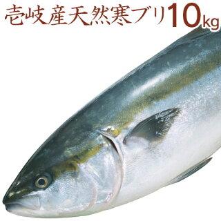 寒ブリ【10kg】壱岐天然