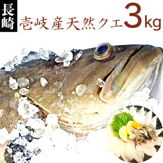 【K】【送料無料】壱岐産天然クエ【3Kg】【RCP】九州では「アラ」、関西では「クエ」、東日本では「モロコ」と呼ばれる高級魚【送料込】