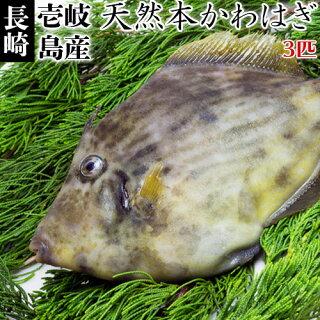 壱岐の漁師のこだわり