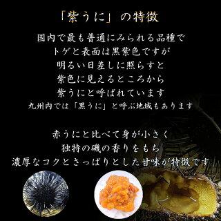 3ムラサキウニの特徴