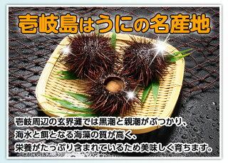 磯の香り豊かで上品な甘みと濃厚な旨味を持つ極上のうに。壱岐島はうにの名産地。