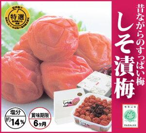 【紀州みなべ特選南高梅】しそ漬梅 500g・化粧箱塩分14% 和歌山県産 産地直送