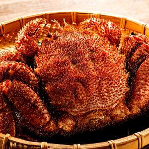 毛ガニ 訳あり 巨大 ジャンボサイズ 1尾 ボイル済み 急速冷凍 カニ味噌 北海道から発送 毛蟹 約1kg