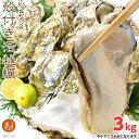 松島湾産 殻付き 牡蠣 3kg 送料無料 中・小サイズ込み 旬 の 生牡蠣 カキ 生食 BBQ 海のミルク 亜鉛 タウリン グリコ…