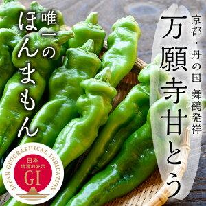 万願寺甘とう秀品150g×8袋(化粧箱入り)