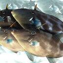 【産地直送】 瀬戸内の天然ウマヅラハギ 鮮魚 1.5kg(3〜6尾)20〜30cm前後