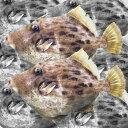 【産地直送】 瀬戸内の天然皮剥 カワハギ 鮮魚 1kg(2〜5尾)20〜25cm前後