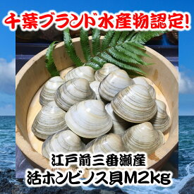 千葉県三番瀬産活ホンビノス貝M2kg【白ハマグリ、大アサリ】14〜18粒程度
