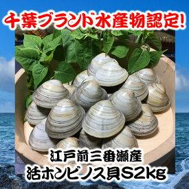 千葉県三番瀬産活ホンビノス貝S2kg【白ハマグリ、大アサリ】20〜28粒程度