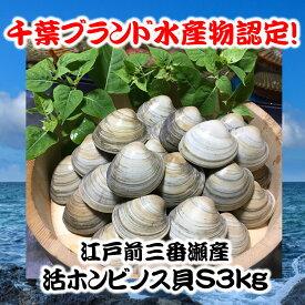 千葉県三番瀬産活ホンビノス貝S3kg【白ハマグリ、大アサリ】30〜45粒程度