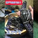 浦戸湾産天然活きガザミ【ワタリガニ】(500g2〜3匹)