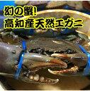 特大!高知産天然エガニ(ノコギリガザミ)1200g超 特産 カニ 蟹 高級 ギフト 贈答 鍋 内子 かにみそ 直送 漁師 レア …