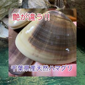 千葉県産天然特大ハマグリ1kg【10〜12個】 天然 直送 バーベキュー 浜焼き 贈答 お取り寄せ お吸い物 活き 貝