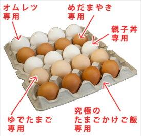 たまごのソムリエセット20個入【送料無料】定期購入卵かけ 卵ご飯 卵かけご飯 たまごかけ たまごかけごはん 卵 ごはん たまごかけご飯 卵かけご飯 たまごかけ御飯 卵かけ御飯 醤油にぴったり たまごのソムリエ 小林ゴールドエッグ