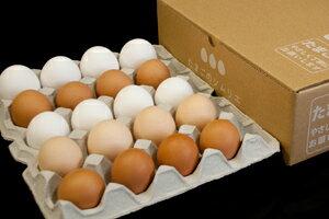 No.000初めてのソムリエセット20個入【送料無料】卵かけ卵ご飯卵かけご飯たまごかけたまごかけごはん卵ごはんたまごかけご飯卵かけご飯たまごかけ御飯卵かけ御飯醤油にぴったりたまごのソムリエ小林ゴールドエッグ