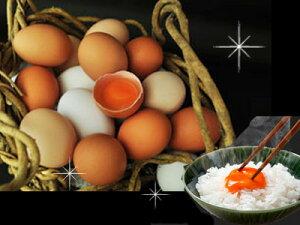 選べる!ギフト24個入プレゼント 贈り物 おくりもの 卵かけ 卵ご飯 卵かけご飯 たまごかけ たまごかけごはん 卵 ごはん たまごかけご飯 卵かけご飯 たまごかけ御飯 卵かけ御飯 醤油にぴった