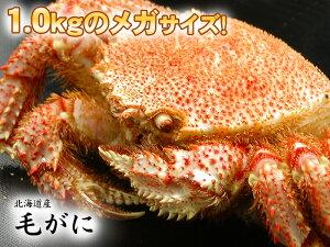 滅多にお目に掛かれない!北海道産1尾1.0kg前後の超メガサイズ毛ガニ!