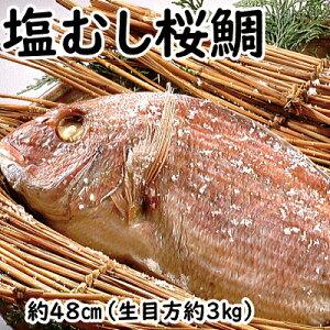 塩むし桜鯛 【生目方3キロ】 敬老の日 鯛 真鯛 桜鯛 おくいぞめ お食い初め おたべはじめ ギフト 贈物 お中元 お歳暮 たい タイ 無添加 国産 天然 鯛めし マダイ 天然 丸ごと1匹 天然鯛