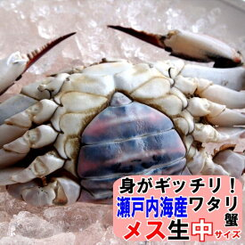 11月発送ワタリガニ メス 選り抜き中(標準)サイズ生約3kg(7−10尾)送料無料わたりがに 渡り蟹 ガザミ ケジャン