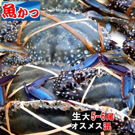 11月発送ワタリガニ メス オス問わず大サイズ生約2kg(5-6尾)活ワタリガニ 送料無料わたりがに、渡り蟹、ガザミケジャン パスタにも