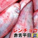 送料無料赤舌平目(アカシタビラメ)レンチョウ約1kg(4-8尾)したびらめ、舌鮃鮮魚 直送