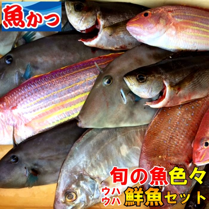 ウハウハ 鮮魚セット旬の 鮮魚 詰め合わせ鮮魚セット 送料無料山口 直送 焼き魚,煮つけ,刺身