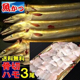生骨切済はも3尾セット 送料無料ハモ湯引き、鱧しゃぶ、はも鍋瀬戸内海産【はも】