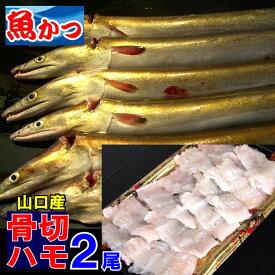 生骨切済はも2尾セット 送料無料ハモ湯引き、はも鍋、鱧しゃぶ瀬戸内海産【鱧】