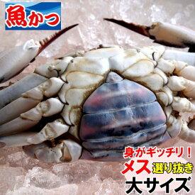 11月発送ワタリガニ メス 選り抜き大サイズ生約1,3kg(3尾)送料無料わたりがに、渡り蟹、ガザミ