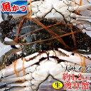 ワタリガニ メス オス問わず大サイズ生約1.2kg(3-4尾)活ワタリガニ 送料無料わたりがに、渡り蟹、ガザミワタリガ二 1kgUPケジャン、パスタにも