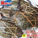 ワタリガニ メス、オス問わず活ワタリガニ 1kg生小ー中サイズ(3-6尾)送料無料ガザミ、渡り蟹、わたりがにケジャン、塩茹で、蒸し蟹、蟹鍋