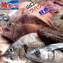 【月間優良ショップ受賞】鮮魚 詰め合わせウハウハ ぎょえーっ鮮魚セット 送料無料鮮魚 おまかせ海鮮福袋 焼き魚 煮つ…