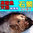 天然物 石鯛(イシダイ)約2kg送料無料