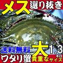 メス選り抜きワタリガニ活〆生大サイズ約1,3kg(3尾)【送料無料】