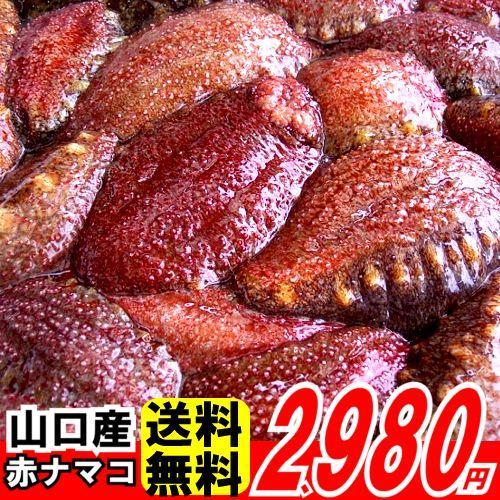 送料無料 山口県産赤なまこ 約500g3−4人前(2−3個)ナマコの中で一番美味しいアカナマコ