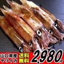 山口県産ヤリイカ期間限定販売約400g【送料無料】
