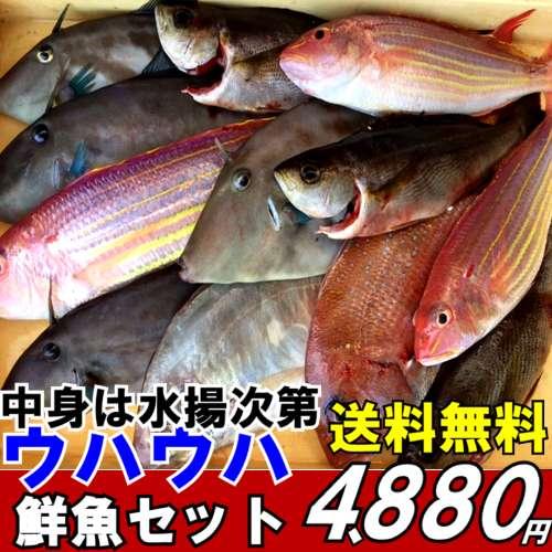 【送料無料】魚かつのウハウハ鮮魚セット旬の魚 詰め合わせ【焼き魚】【煮つけ】【刺身】夏セール2018