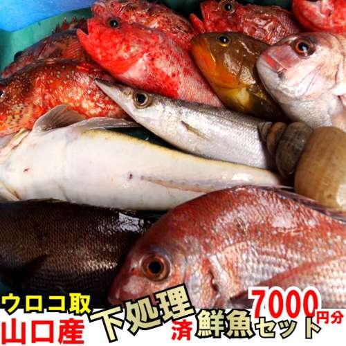下処理 鮮魚セット送料無料 7000円分煮付け,焼き魚,刺身魚 鮮魚 詰め合わせお刺身 鮮魚 直送
